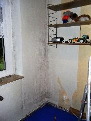 Schimmelpilz in der Wohnung